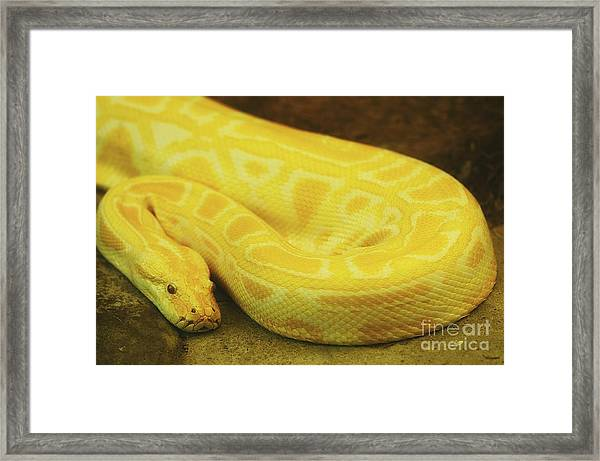 Waiting For Its Prey Framed Print