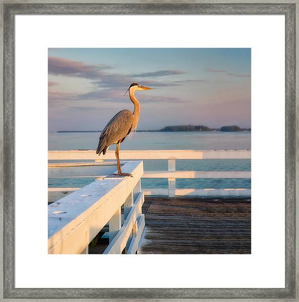 Waiting For The Fishing Boats To Arrive Framed Print