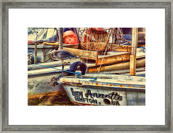 Waiting On Miss Lucy Framed Print