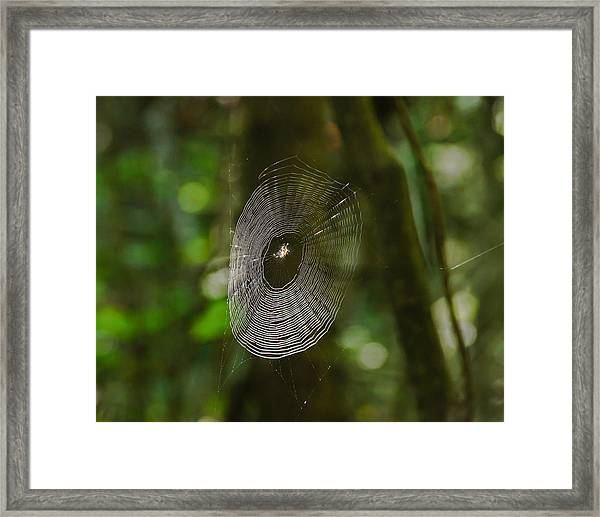 Waiting On The Web Framed Print