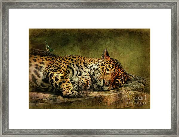 Framed Print featuring the photograph Wake Up Sleepyhead by Lois Bryan