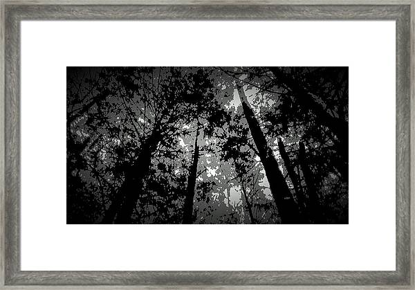 Walk In The Shadows Framed Print