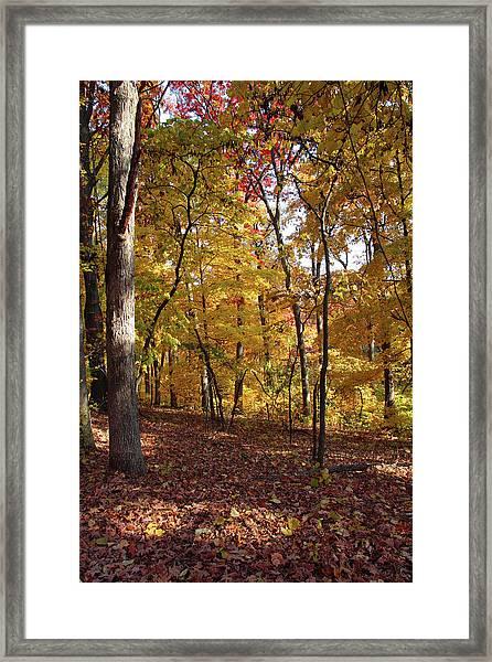 Walk In The Woods - Vertical Framed Print