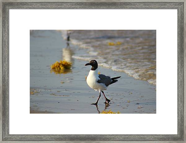 Framed Print featuring the photograph Walk On The Beach by Candice Trimble