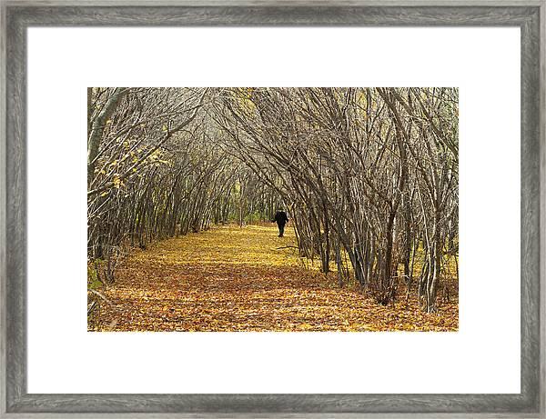 Walking A Golden Road Framed Print