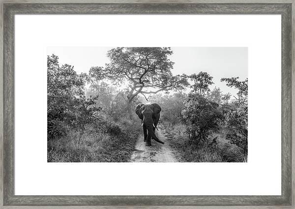Walking Giant Framed Print by Jaco Marx