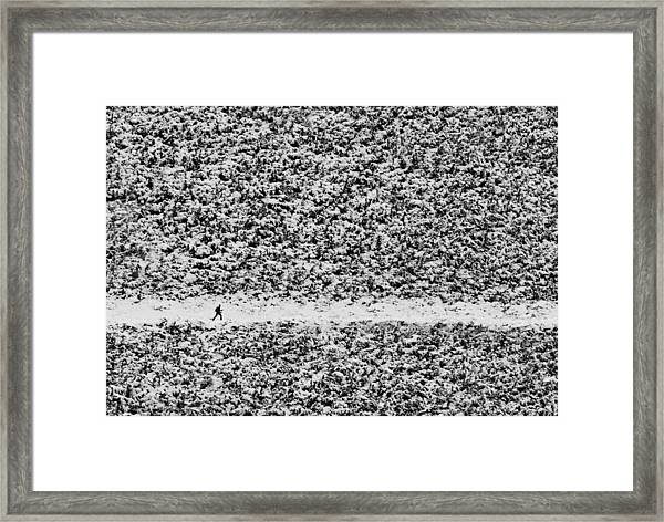 Walking Through Confusion Framed Print