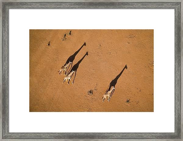 Walking Under Sunset Framed Print by John Fan