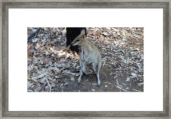 Wallabie And Baby Framed Print