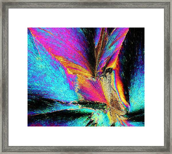 Warm Fuzzy Feeling Framed Print