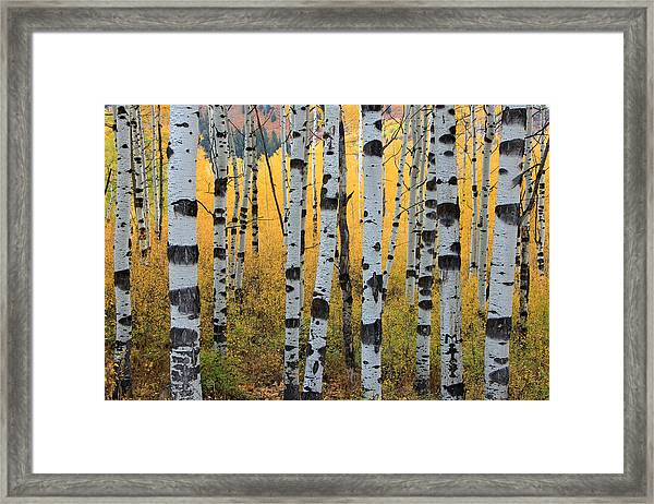 Wasatch Aspens Framed Print