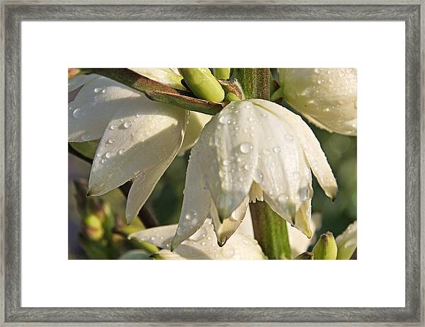 Washed Clean Lll Framed Print