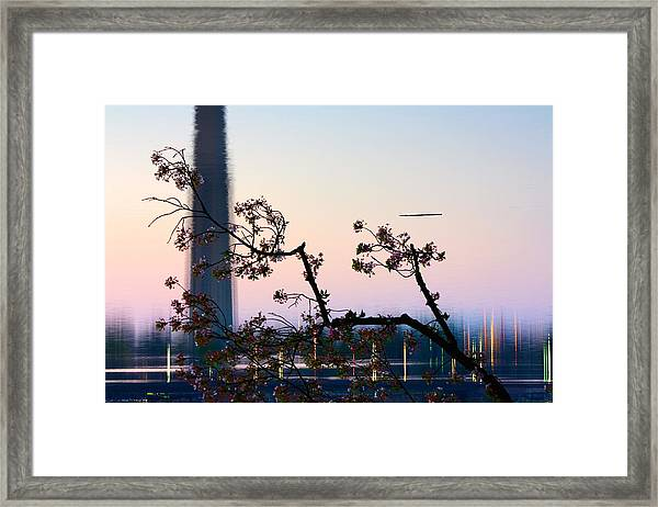 Washington Monument Reflection With Cherry Blossoms Framed Print