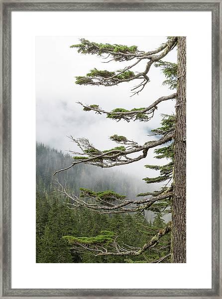 Washington, Mount Rainier National Park Framed Print by Jaynes Gallery