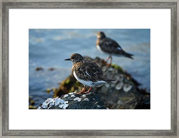Watchbirds Framed Print