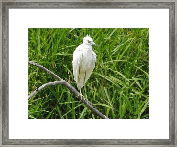 Watchful Heron Framed Print