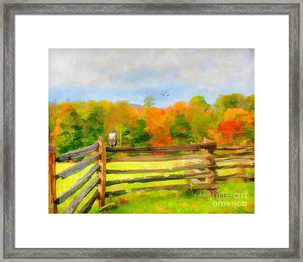 Watching Autumn Framed Print