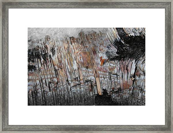 Framed Print featuring the photograph Water And Birch by Dylan Punke