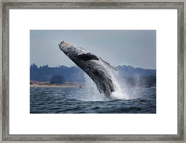 Water Ballet Framed Print by Chase Dekker Wild-life Images