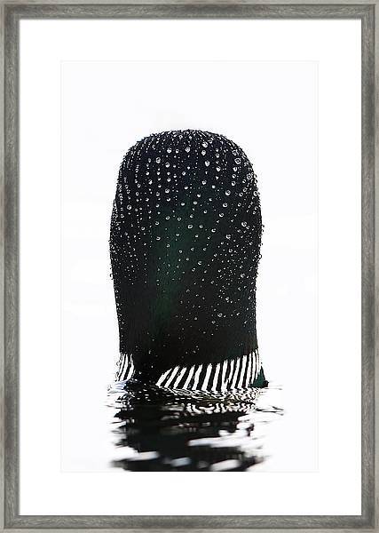 Water Drops On A Loon Framed Print by Jim Cumming