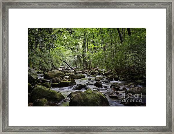 Water Falls Woods Framed Print by Mina Isaac
