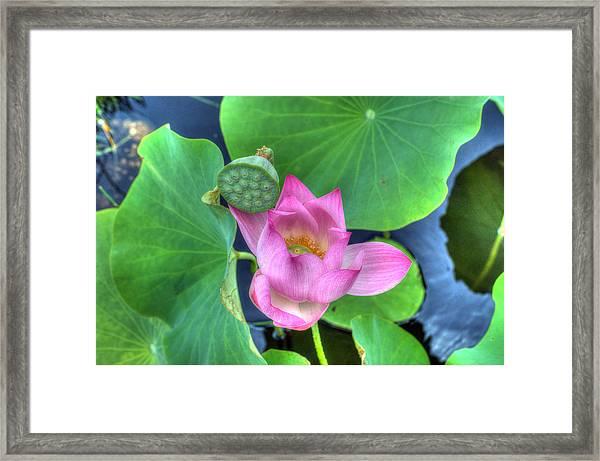 Water Flower Framed Print