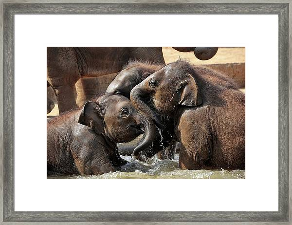 Water Fun Framed Print