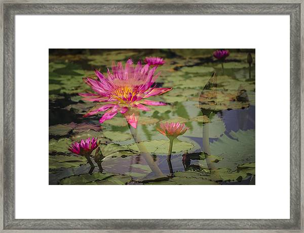 Water Garden Dream Framed Print