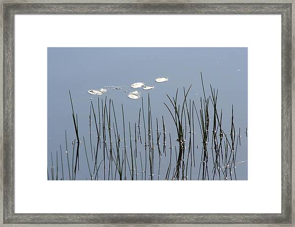 Water Lilies Framed Print by Carolyn Reinhart