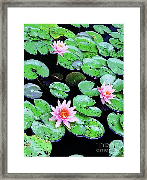 Water Lillies -- Inspired By Monet-2 Framed Print