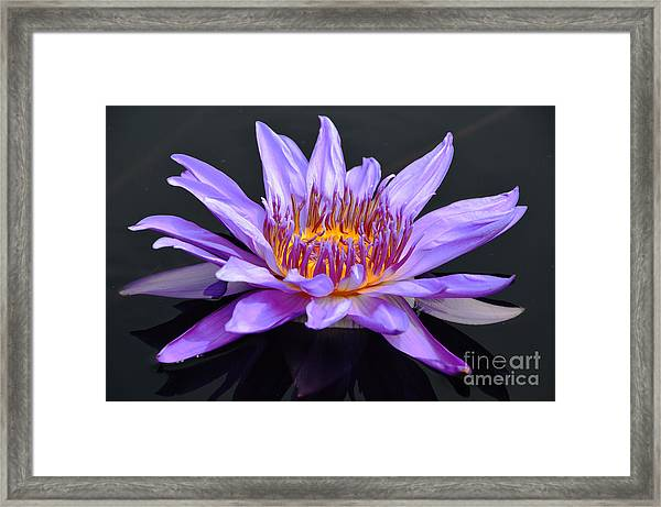 Water Lily - Aquarius Framed Print