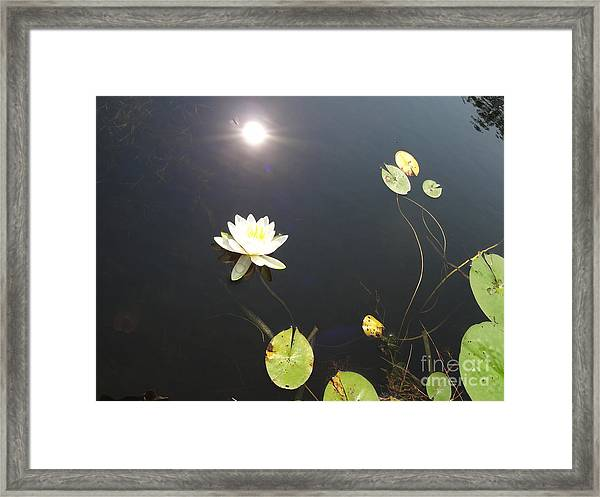 Water Lily Framed Print