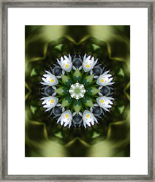 Water Lily Mandala Framed Print by Peter Kallai