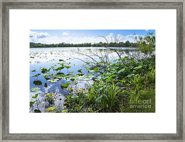 Water Plants And Their Landscape Framed Print