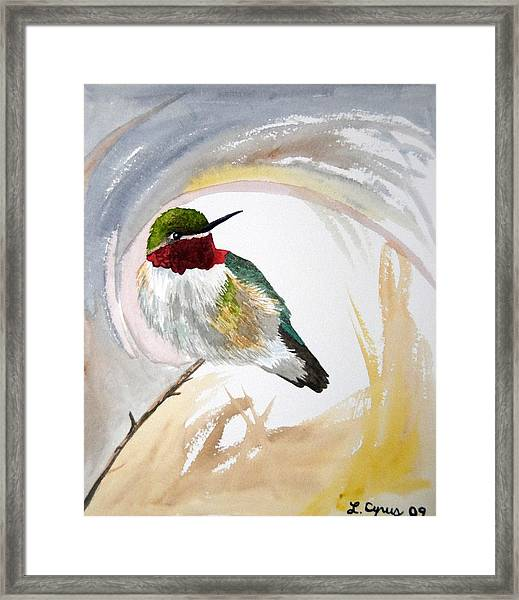 Watercolor - Broad-tailed Hummingbird Framed Print