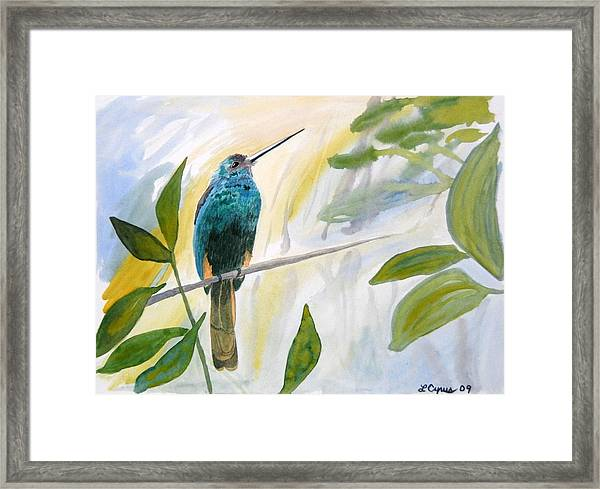 Watercolor - Jacamar In The Rainforest Framed Print