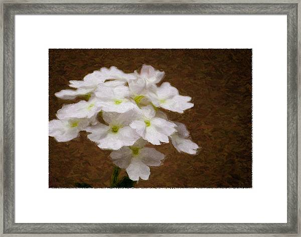 Watercolor Of Daisies Framed Print