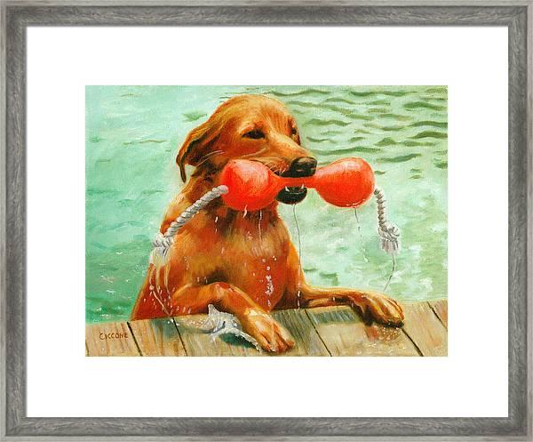 Waterdog Framed Print