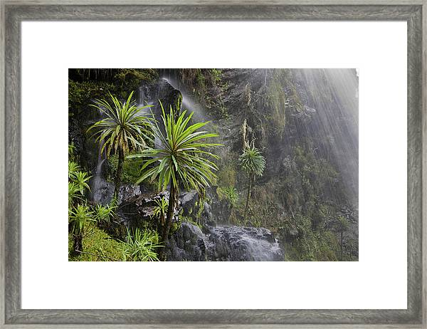 Waterfall At Mount Stanley, Ruwenzori Framed Print by Martin Zwick