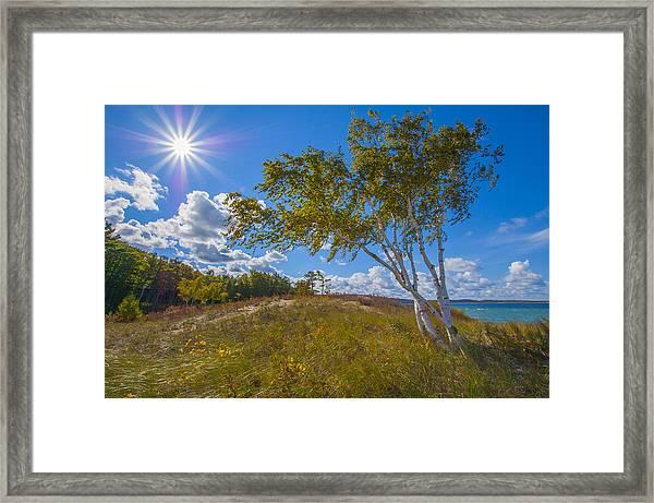 Waterfront Sunshine Framed Print