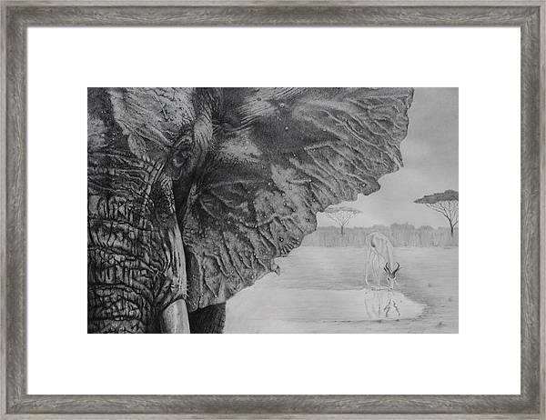 Waterhole Framed Print