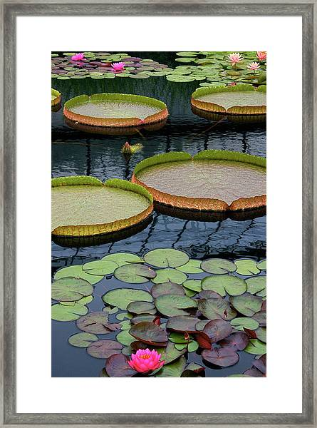 Waterlilies And Platters 2 Framed Print