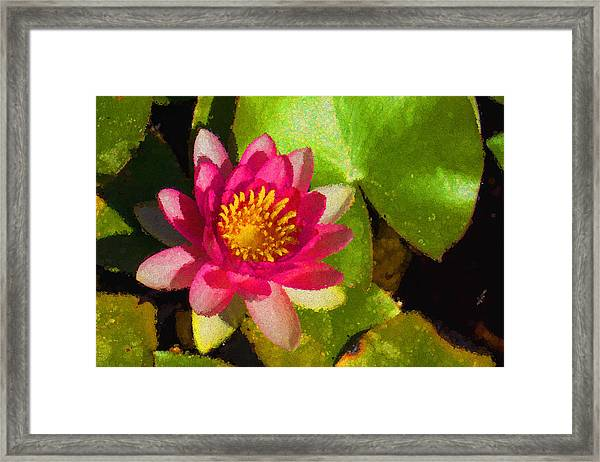 Waterlily Impression In Fuchsia And Pink Framed Print