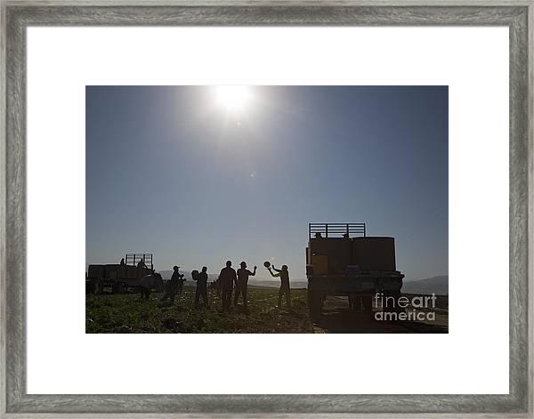 Watermelon Harvest Framed Print
