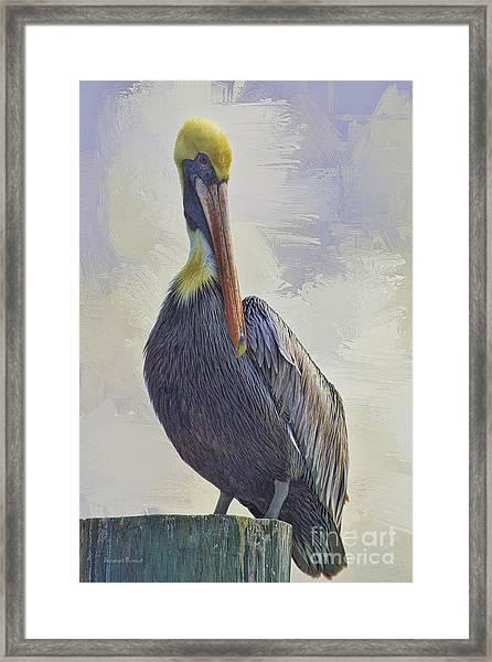Waterway Pelican Framed Print
