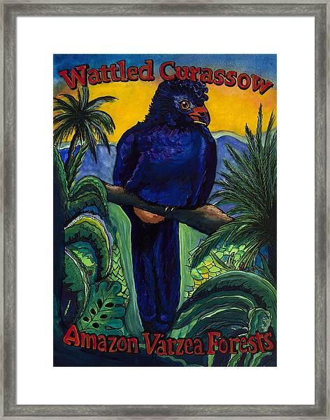 Wattled Carassow Framed Print