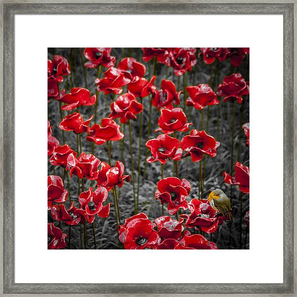 We Will Remember Them Framed Print by S J Bryant