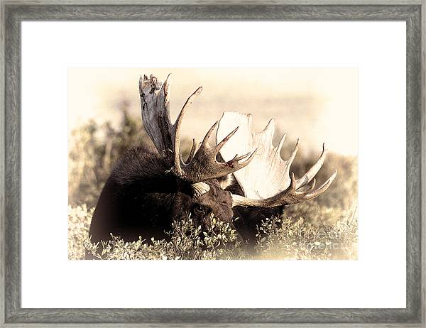 Wear A Crown Framed Print