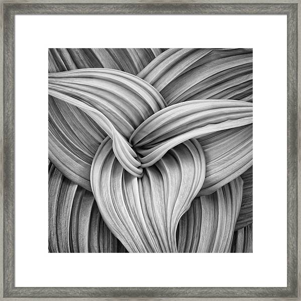 Web And Flow Framed Print