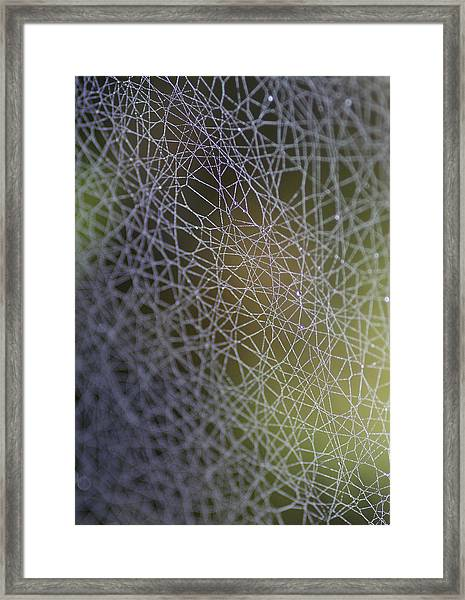 Web Connections Framed Print